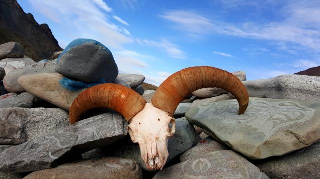 Mount Kailash Trek Yak Skull
