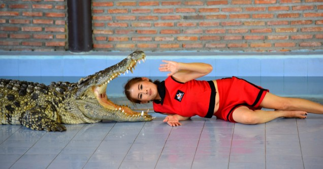 damnoen-saduak-floating-market-crocodile-2-large
