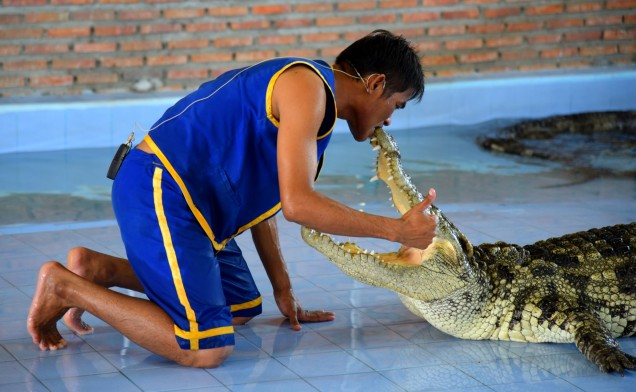 damnoen-saduak-floating-market-crocodile-large