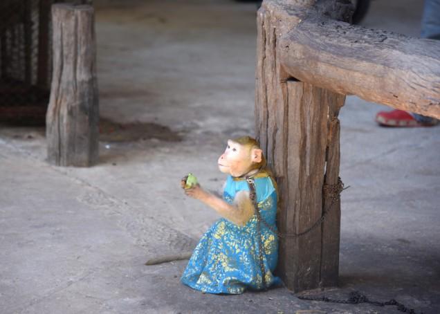 damnoen-saduak-floating-market-monkey-large