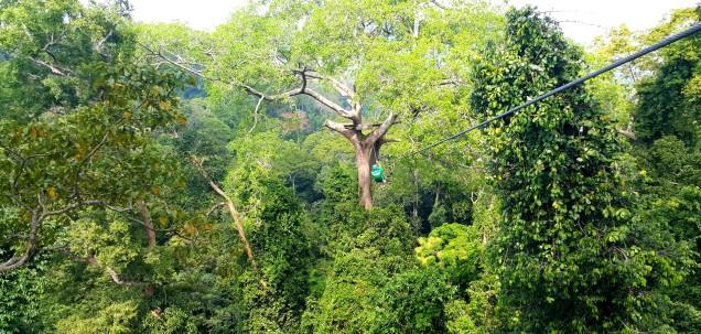 flight-of-gibbon-trees-large