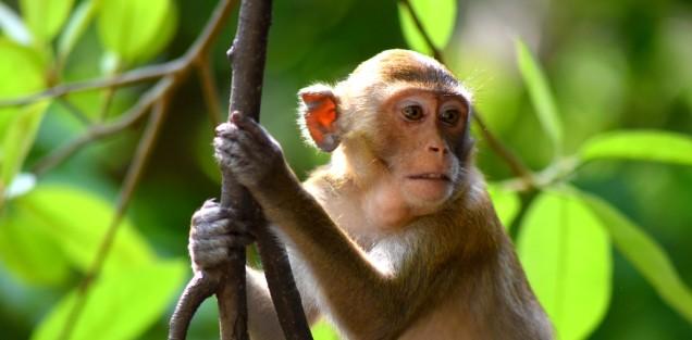 khao-kheow-open-safari-park-mokey-large