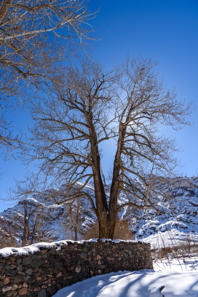 08-Leh-Ladakh-Near-Hemis-Monastery