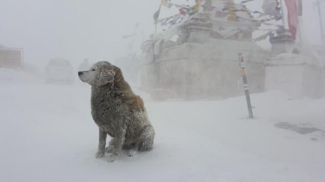 16-Leh-Ladakh-Cha gla-Pass