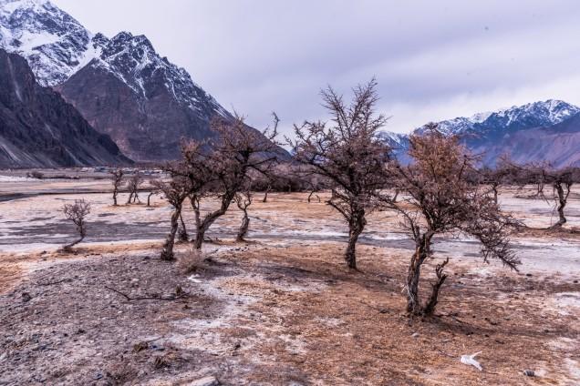 26-Leh-Ladakh-Nubra-Valley