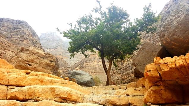 06-Wadi-Shah-Trail-Tree