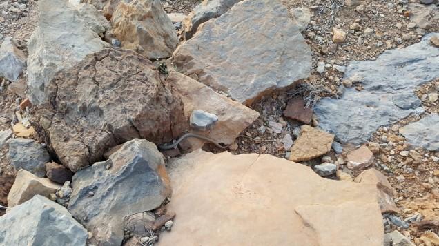 22-Wadi-Shah-Trail-Farm-Snake