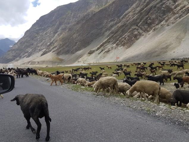 07-On-The-Way-to-Srinagar (2)