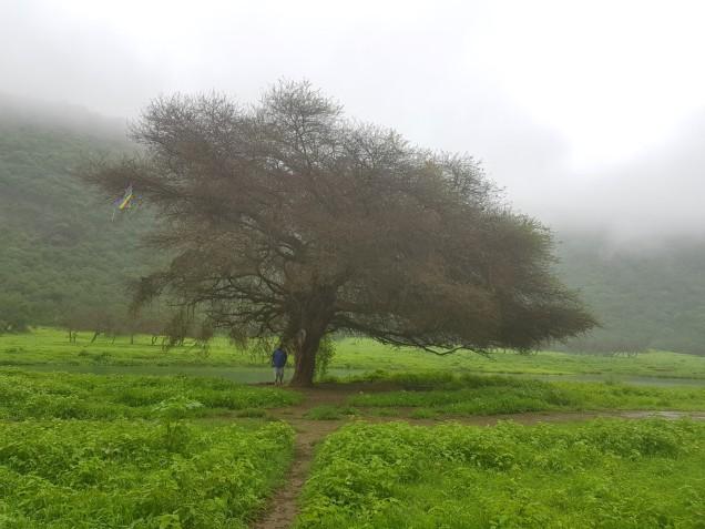 09-Salalah-Wadi-Darbat